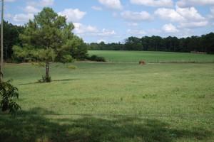 Pasture at Hawkes Creek Farm